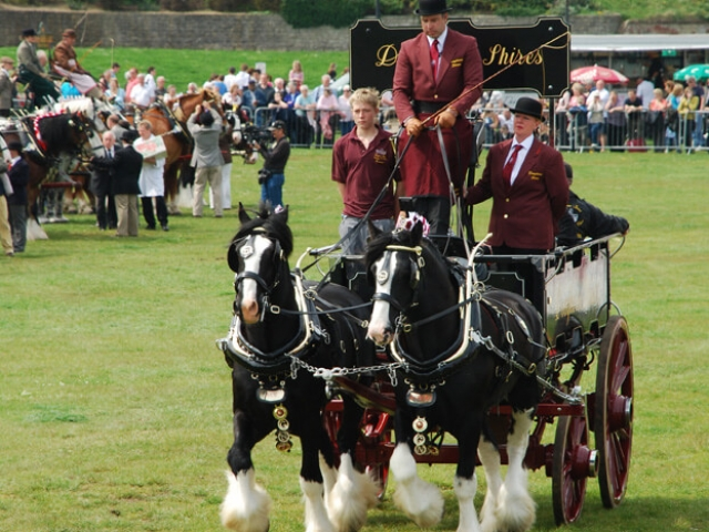 Drayhorse Shires can offer a pair of black shire horses with a variety of carriages