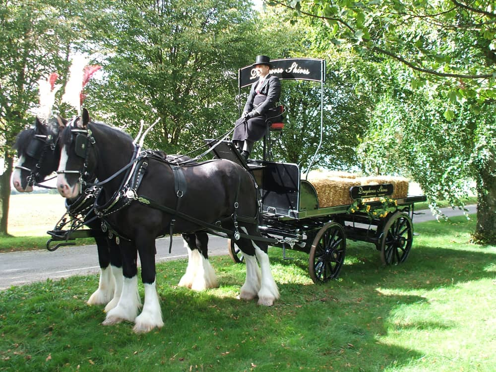 Flatbed-Dray-seats-8-Dray Horse Shires