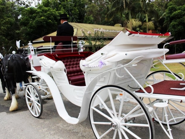 Vis-A-Vis Drayhorse Shires - Gold Coast, Boonah, Brisbane