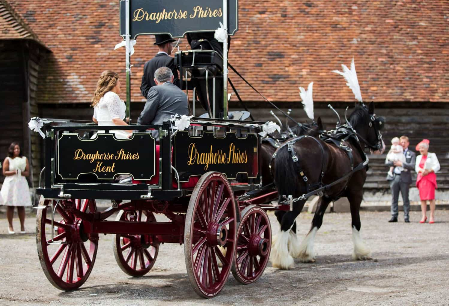 Brewery Dray-Wedding-Drayhorse-Carriages Hire, Sale, Brisbane, Gold Coast