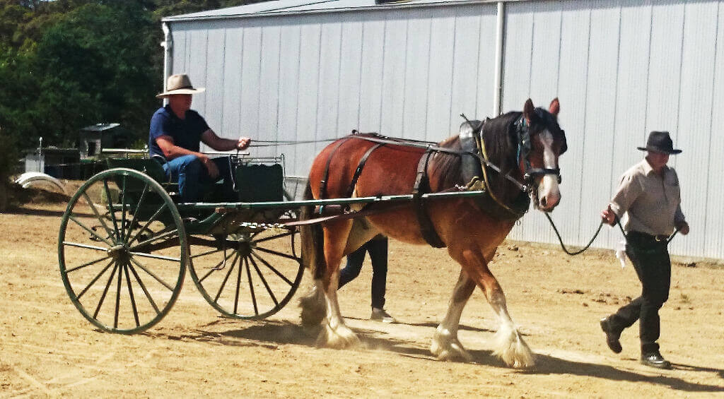 Dray Horse Shires provide training for both horses and driver's for single. Pairs, teams and multiple