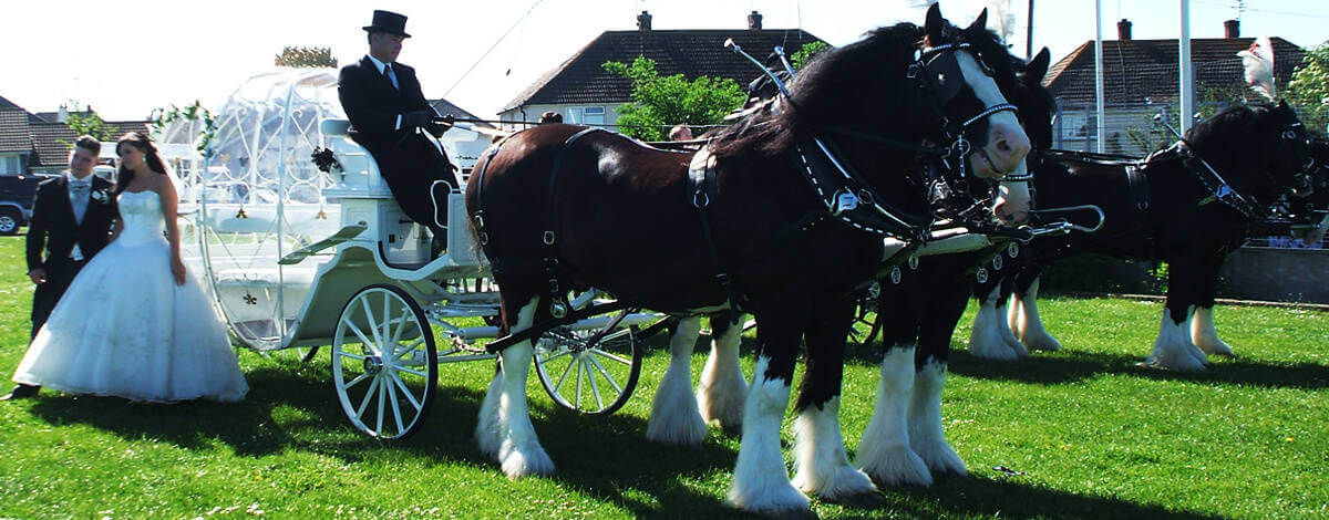 Cinderella Pumpkin Carriage arrives with flowers, horses plumes , and coachman's ties to suit your colour scheme. For that extra fairy tale feel to your wedding or special event this carriage comes with fairy lights.
