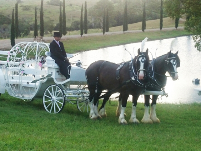 Cinderella-Wedding-Carriage-with-Drayhorse-Shires