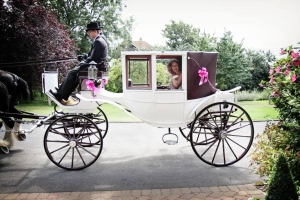 Drayhorse Shires Wedding Carriages-For Hire and Sale, Brisbane Gold Coast