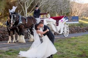 Wedding Carriage - Drayhorse Shires, Brisbane, Gold Coast, Boonah Qld
