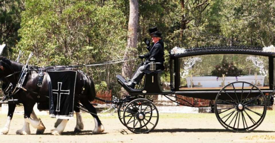 Funeral Carriage - Drayhorse Shires