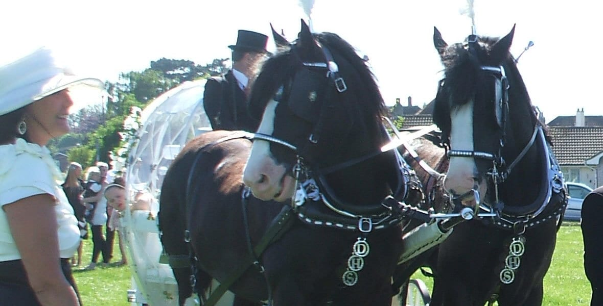 Drayhorse Shires, Horses and Carriages for hire, Brisbane, Gold Coast, Sunshine Coast