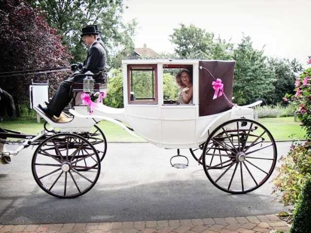 Wedding Carriage Hire - Drayhorse Shires, Gold Coast, BrIsbane