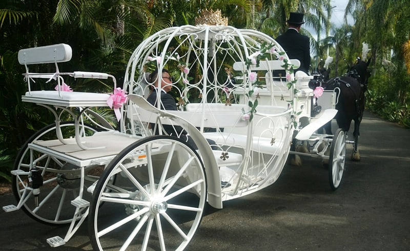 Cinderella Carriage Wedding- Drayhorse Shires, Brisbane, Gold Coast