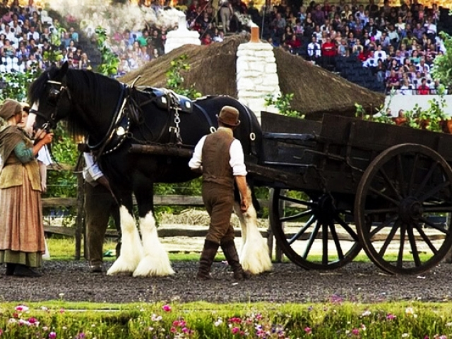 Horse Drawn Services - Drayhorse Shires Australia