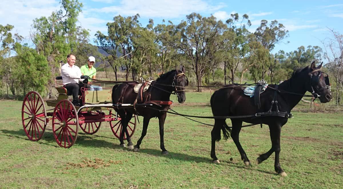 Horse Training - Drayhorse Shires Australia, Boonah