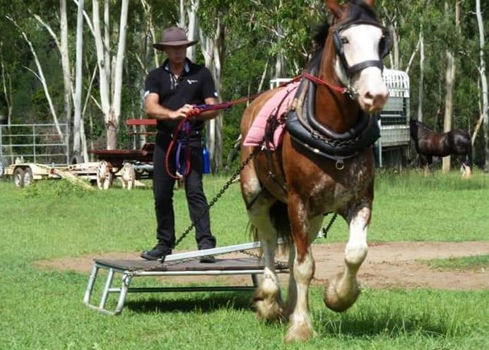 Horse Training - Drayhorse Shires Australia
