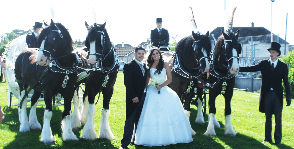The Gold Wedding Package - Drayhorse Shires