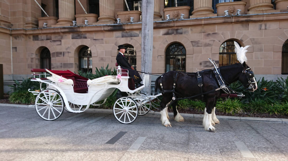 Vis A Vis Wedding Carriage Hire and Drayshore Shire Horses, Brisbane, Gold Coast