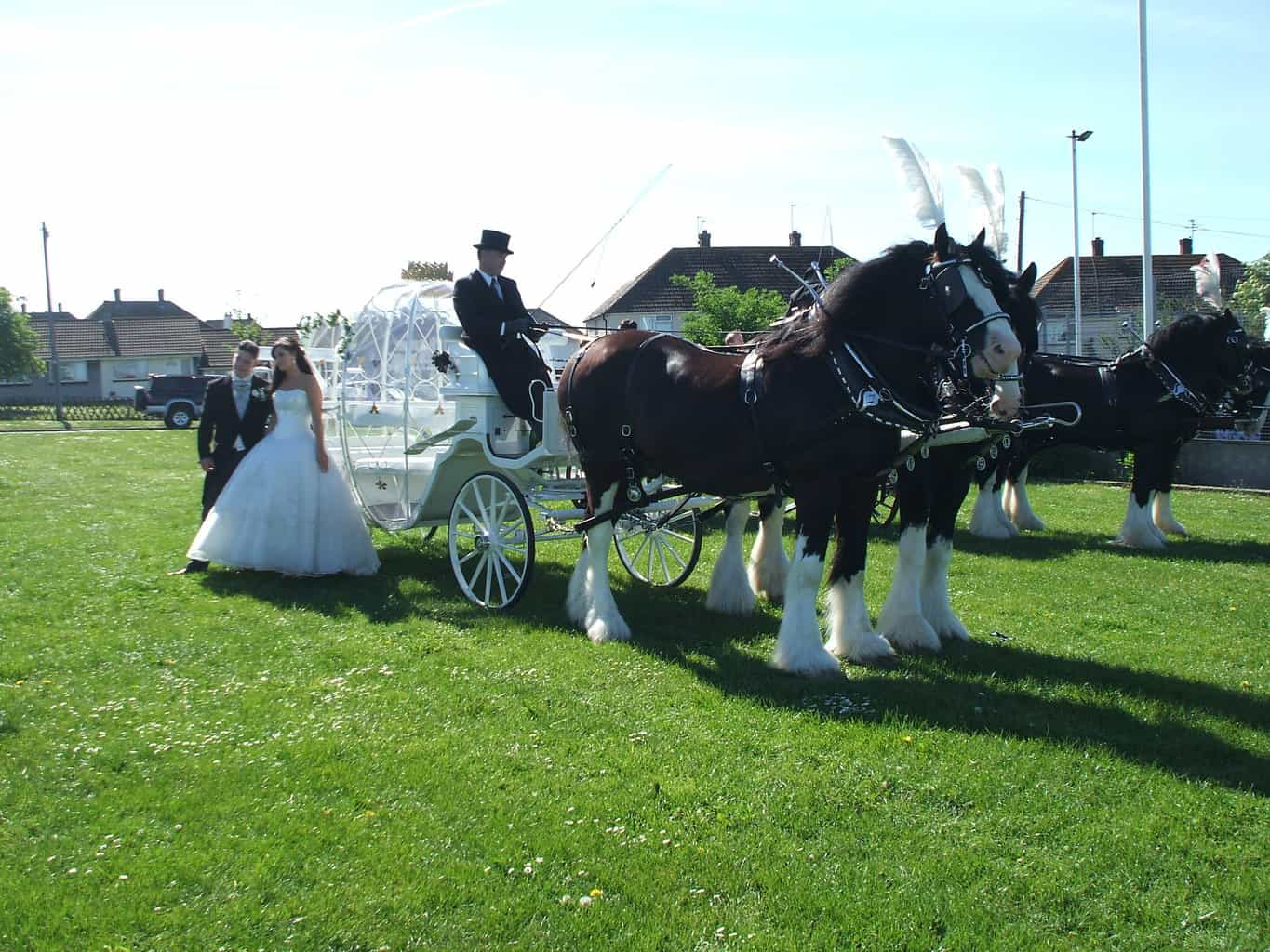 Cinderella Pumpkin Wedding Carriage - Drayhorse Shires Australia