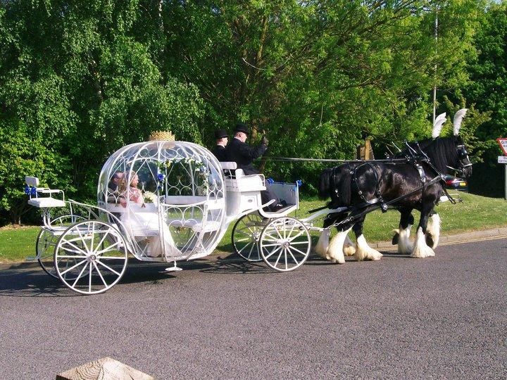 Cinderella Wedding Carriage - Drayhorse Shires, Brisbane, Gold Coast, Sunshine Coast