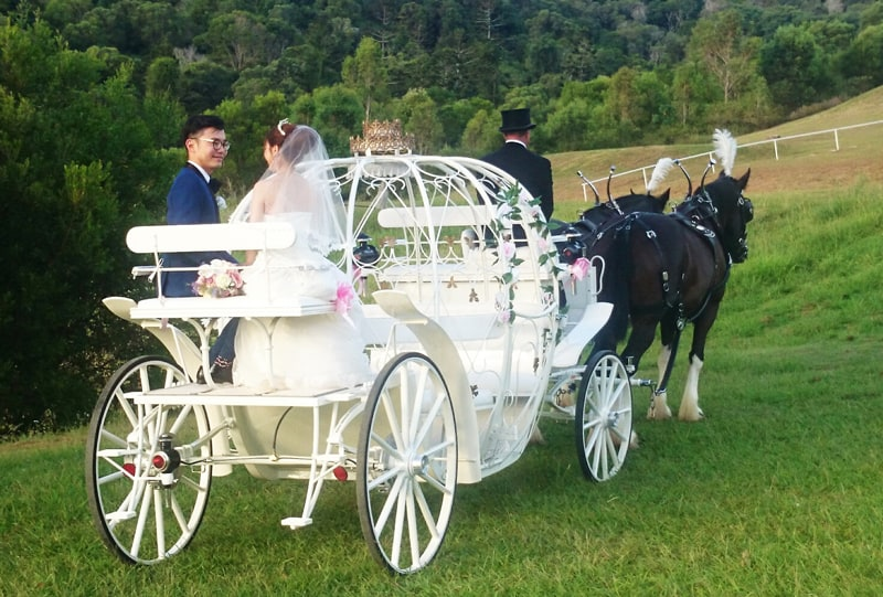 Cinderella Wedding Carriage - Drayhores Shires Australia, Brisbane, Gold Coast, Sunshine Coast