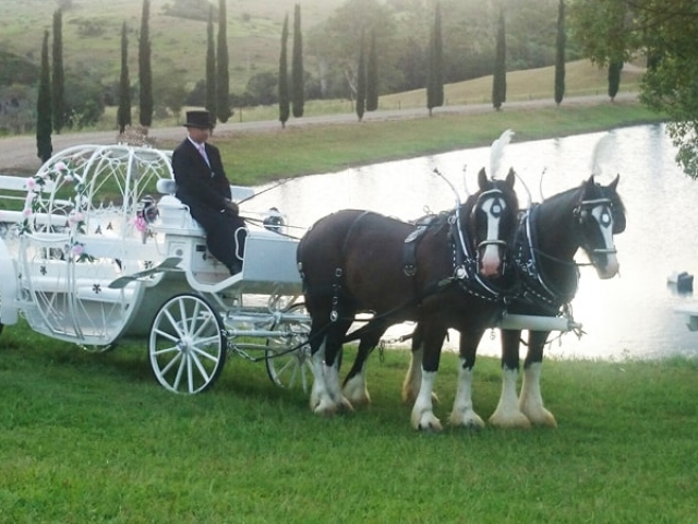 Cinderella Wedding Carriage - Drayhorse Shires