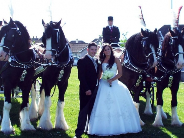 Perfect Wedding Day - Cinderella Carriage Hire - Drayhorse Shires