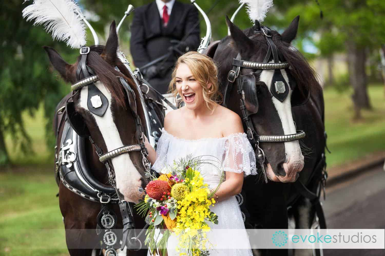 Drayhorse Shires Australia - Wedding Carriage Hire, Brisbane, Gold Coast