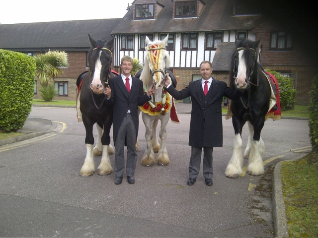 Indian Wedding Horses for Hire, Brisbane, Gold Coast, Sunshine, Coast - Drayhorse Shires