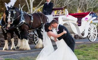 Wedding Horses & Carriage
