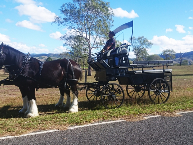 High Seat Trainer Header for your bridal party for up to 10 people. Drayhorse Shires, Brisbane, Gold Coast, Australia