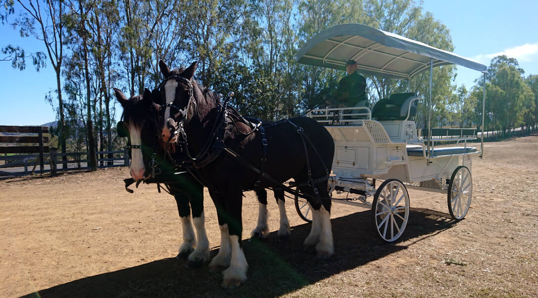 High Seat Trainer Header - Drayhorse Shires, Brisbane, Gold Coast, Australia