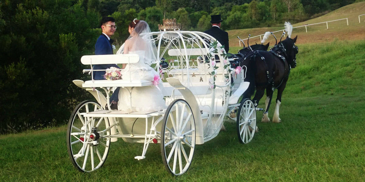 Cinderella Carriage-Wedding-Drayhorse Shires