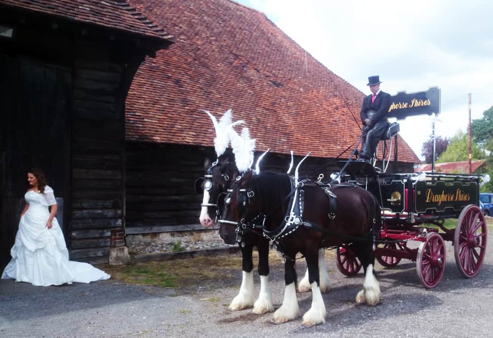 Brewery Dray Hire and Drayhorse Shire Horses, Brisbane, Gold Coast