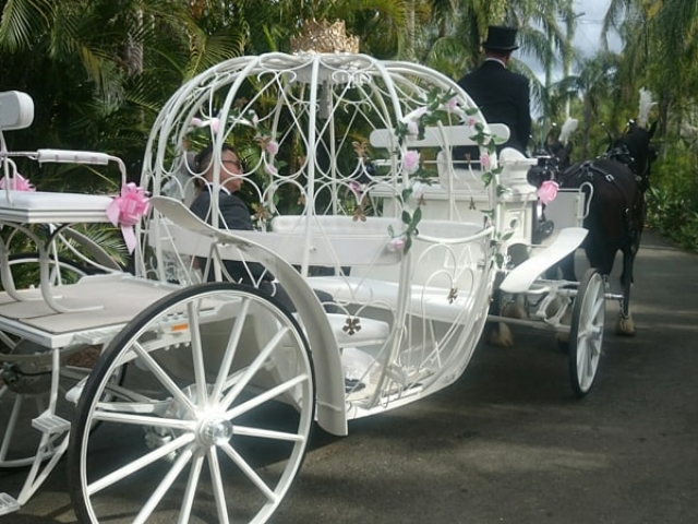 Cinderella Carriage & Horse Hire - Drayhorse Shires Australia