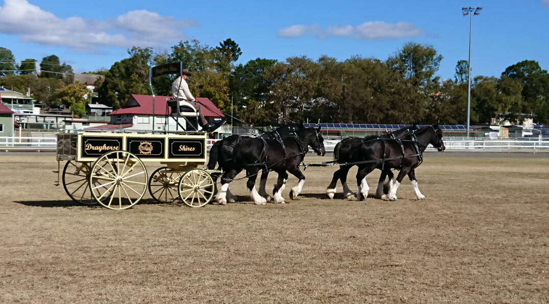 Cream Country Dray - Weddings - Drayhorse Shires, Brisbane, Gold Coast, Sunshine Coast