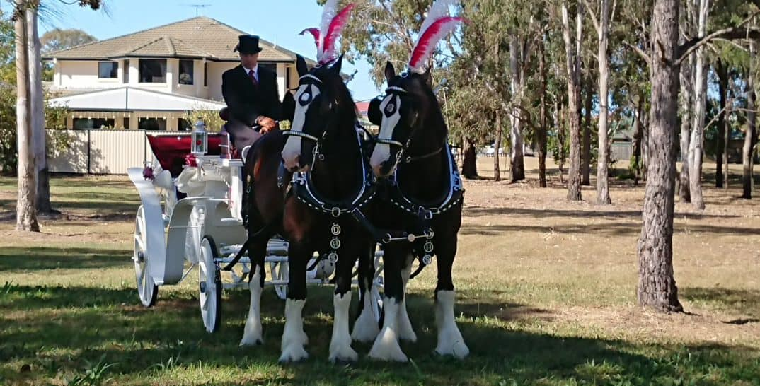 Drayhorse Shire Weddings, Brisbane, Gold Coast, Sunshine Coast