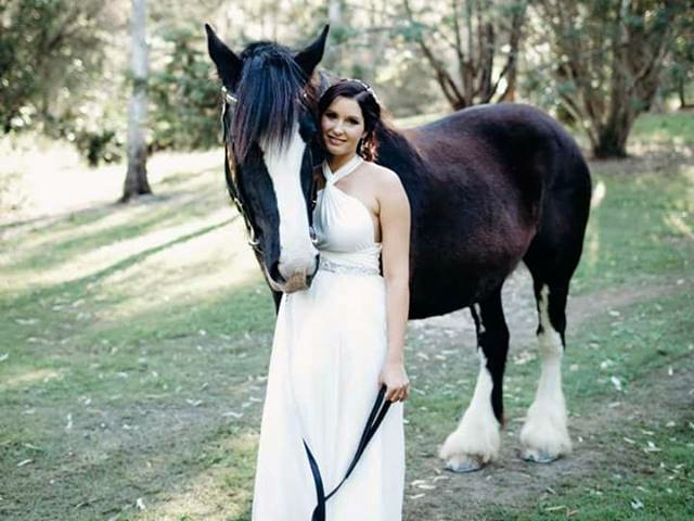 Drayhorse Shires Fleur - Ridden Wedding - Brisbane, Gold Coast