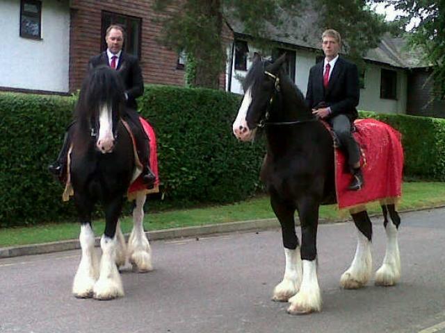 Ridden Horses - Dray Horse Shires Australia