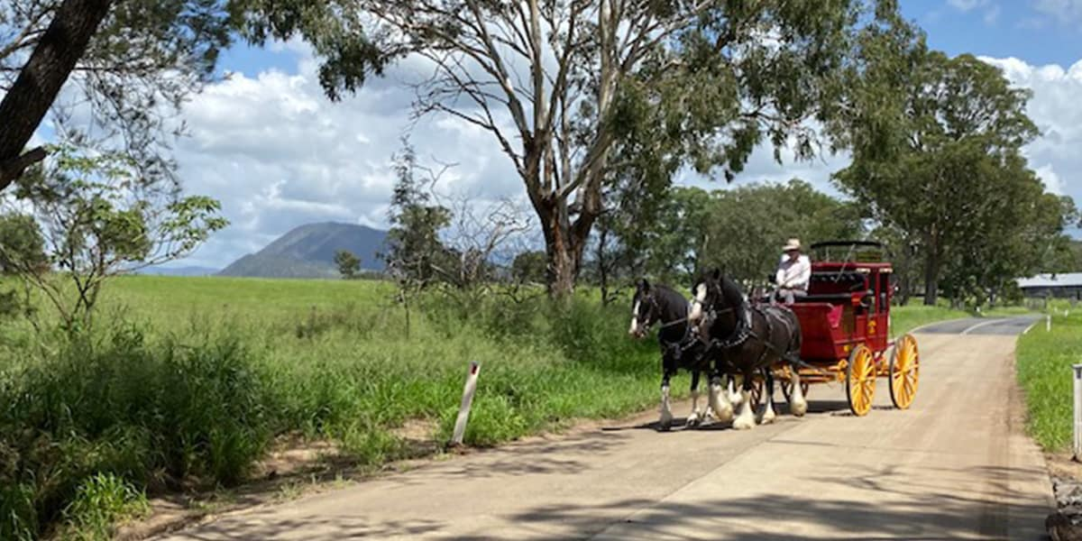 Cobb & Co Wagon tours with traditional drovers lunch, Pulled by a pair or team of Shire horses by Drayhorse Shires & Carriages, Maroon, Qld
