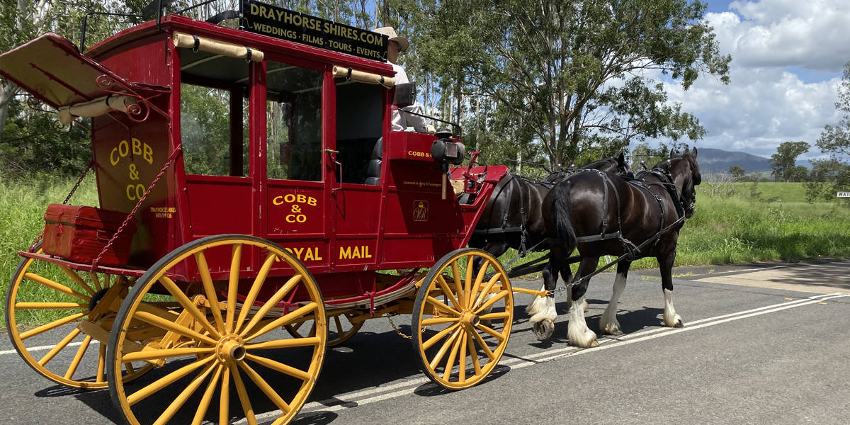 Shire Farm Horse and Cobb & Co Wagon Tours by Drayhorse Shires, Boonah Qld Queensland.