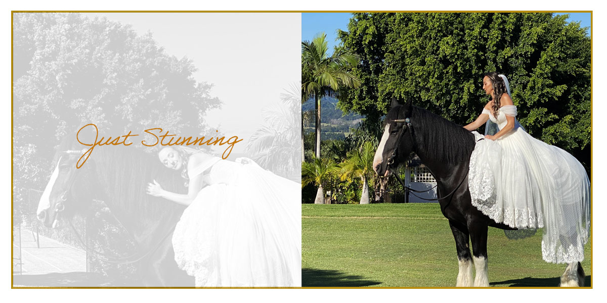 Ridden Wedding Horses, ride a Drayhorse Shire horse on your wedding day for amazing memories, contact Drayhorse Shires